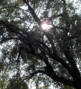 Sun Through the Tree